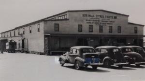 Gus Hall Citrus Fruits